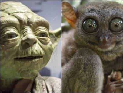 Tarsier-Yoda-1
